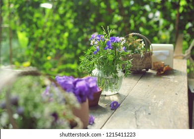 Flower pots with plants on table.