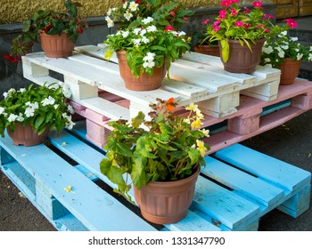 Flower pots stand on wooden pallets painted in different colors