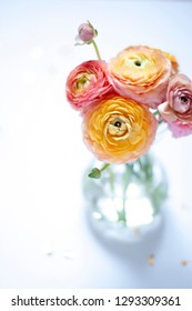 Flower ranunculus close up on the white background. Floral concept card