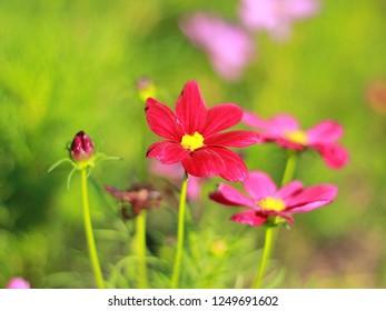 Flower red coler