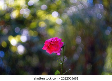 Flower with red petals and green leaves and Helios lens swirly bokeh.