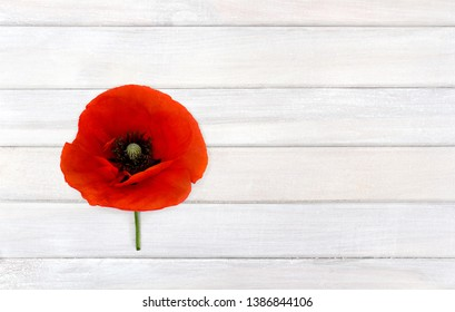 Flower red poppies (Papaver rhoeas, common names: corn poppy, corn rose, field poppy, red weed) on background of white painted wooden planks with space for text. Top view, flat lay