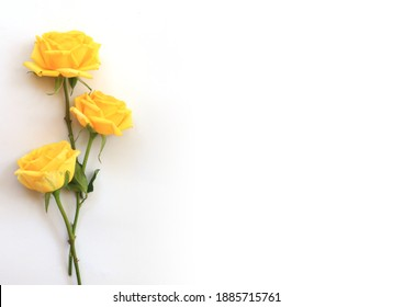 Flower and rose background. yellow roses composition.  Roses and petals isolate on white background. Valentine day concept. Flat lay, top view, copy space