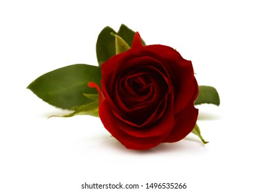 A flower of roses. Isolated on white