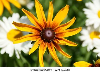Flower in sammer macro
