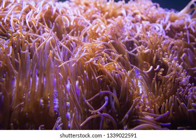 Flower sea living coral and reef color of sea ocean environment.