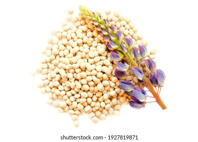 Flower and seeds of lupine on a white background, top view. Lupinus polyphyllus. Lupine inflorescence, leaf and seeds, top view. Seeds and lupine flower isolated on white background, top view.