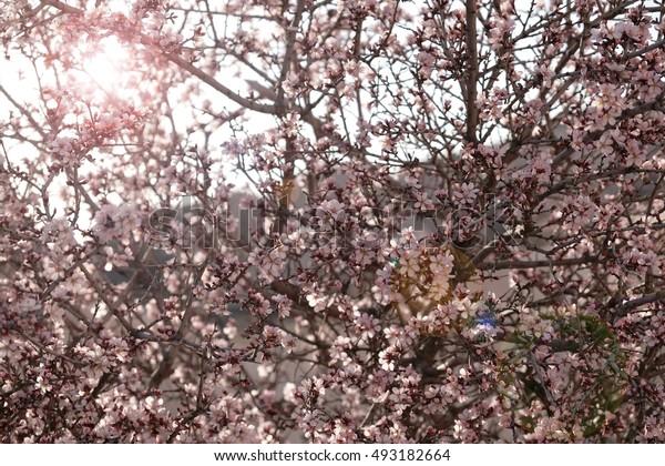 Flower sepia tone