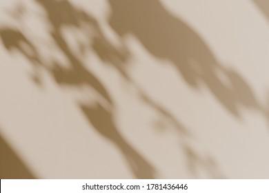 Flower shadows in sunlight. Floral silhouette on neutral beige background
