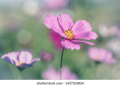 Flower in a soft pastel background