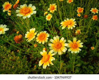 Many kind of flower images stock photos vectors shutterstock a flower is a special kind of plant part flowers are also called the bloom mightylinksfo Images