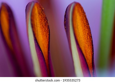 Flower stamens with pollen macro pictures abstract background. Bright colorful organic background. Pistils and stamens with yellow dust pollen