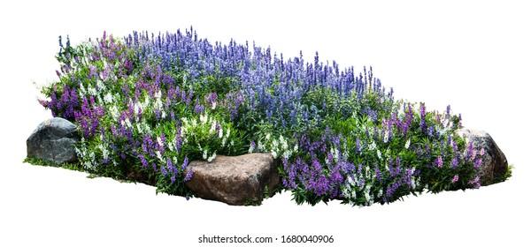 Flower and stone in garden isolated on white background. Garden flower part.