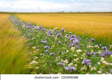 Flower strip ecological farming