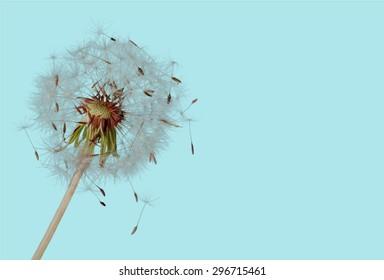 Flower, Summer, Backgrounds.