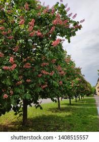 flower summer nature tree blossom
