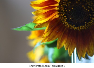 A flower of a sunflower is a symbol of the sun. A bright, beautiful flower that stretches toward the sun. Yellow petals, through which the sun shines.