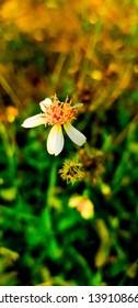 The Flower in sunlight sommer