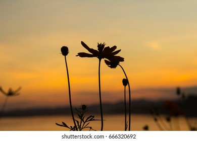 Flower with sunset background