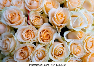 Flower texture, pink texture of a bouquet of roses
