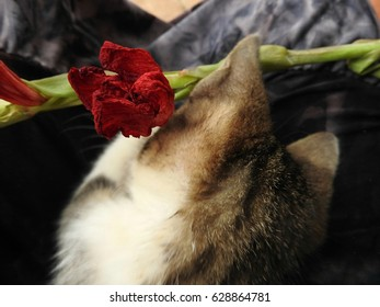 The flower Thatcher charmed my cat.