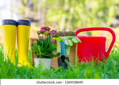 Transplant Flowers in the Open Ground Images, Stock Photos