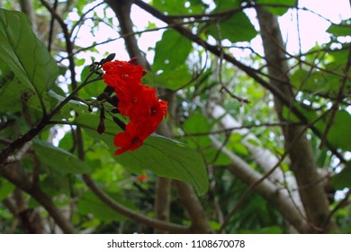 The Flower in the tree