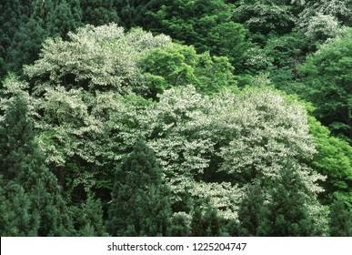 Flower of tree