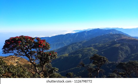 Flower tree and landscape view, Tedim Chin State Myanmar
