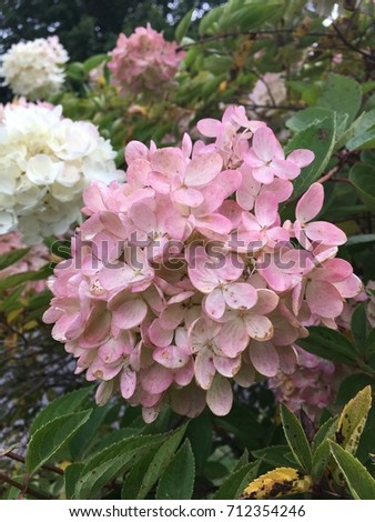 Flower Tree North Carolina Stock Photo Edit Now 712354246