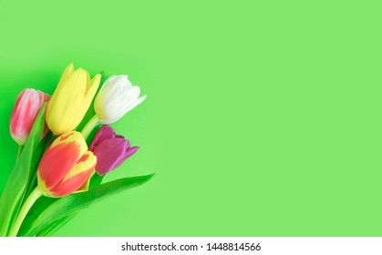 flower tulip frame colored background