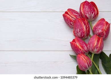 Flower tulips. Bouquet of five yellow red striped tulips on a white wooden floor. Top view, flat lay with empty space.