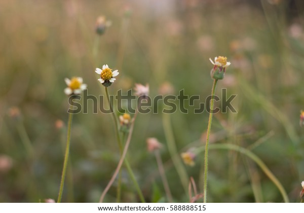 flower Velcro flower Wallpaper