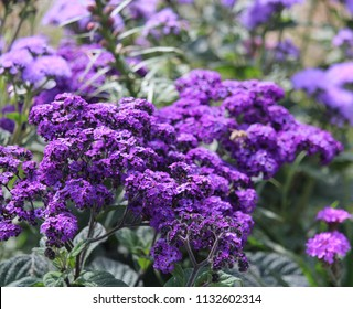 flower, violet flower, floral wallpaper, floral, nature