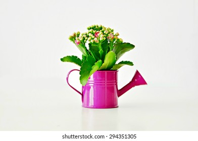 Flower in a violet watering can