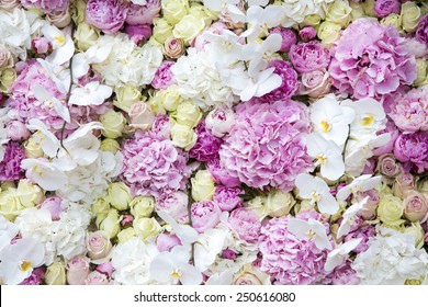 Flower wall - gorgeous floral composition of the orchids and roses in white and pink colors.