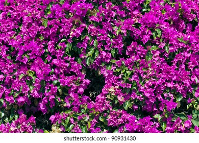 Flower Wall,Background