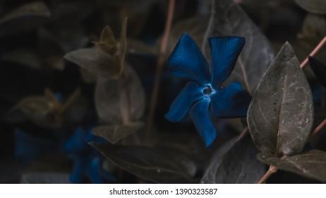 Blue Flower Nature Full Hd Wallpaper Images Stock Photos Vectors