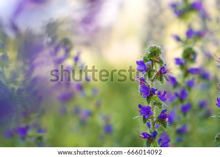 Flower Wallpapers For Your Desktop Field Of Bright Blue Summer Flowers