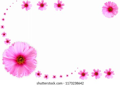 flower  in white background for peace meditation spa health freedom nature concept background