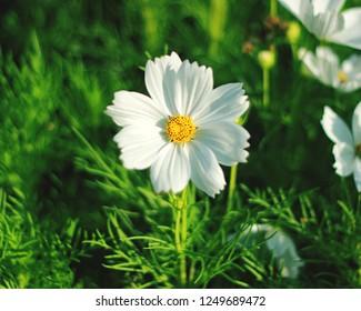 Flower white coler