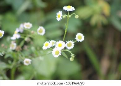 flower White in florest