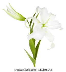 Flower white isolated over white