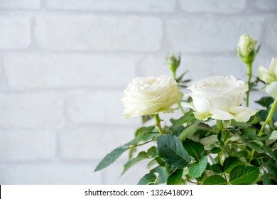 Flower, white rose plant with flower blooming and green leaves and brick gray white wall background.