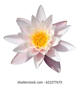 Flower of white water lily on a white background, isolated