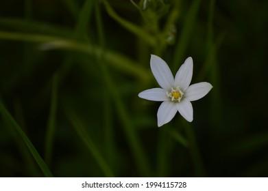 flower wildflowers whiteflower naturel flower