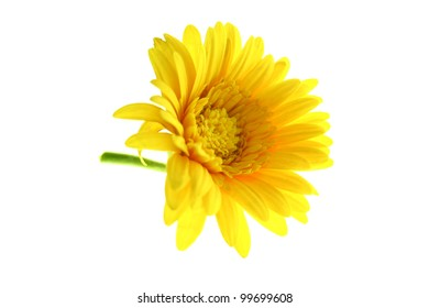 flower yellow on white background. Isolated bright colorful bloom