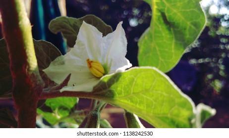 Flowera Beauty in nature