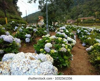 Flowera In Brazil