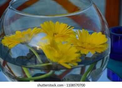 flowera in glass